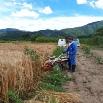 「刈取り・脱穀・収穫祭」